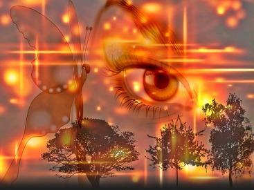 farfalla occhio